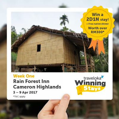 Traveloka Winning Stay , #TravelokaWinningAStay , Tempah Hotel Dengan Traveloka , #TravelokaWinAStay , Traveloka Unggul Stay , Syarat Syarat Traveloka Winning Stay Contest , Facebook Page Traveloka , Rain Forest Inn Cameron Highlands , Pahang , Jom Join Contest Traveloka