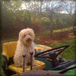 Dog friendly orchard apple picking Drew Farm New England Fall Events