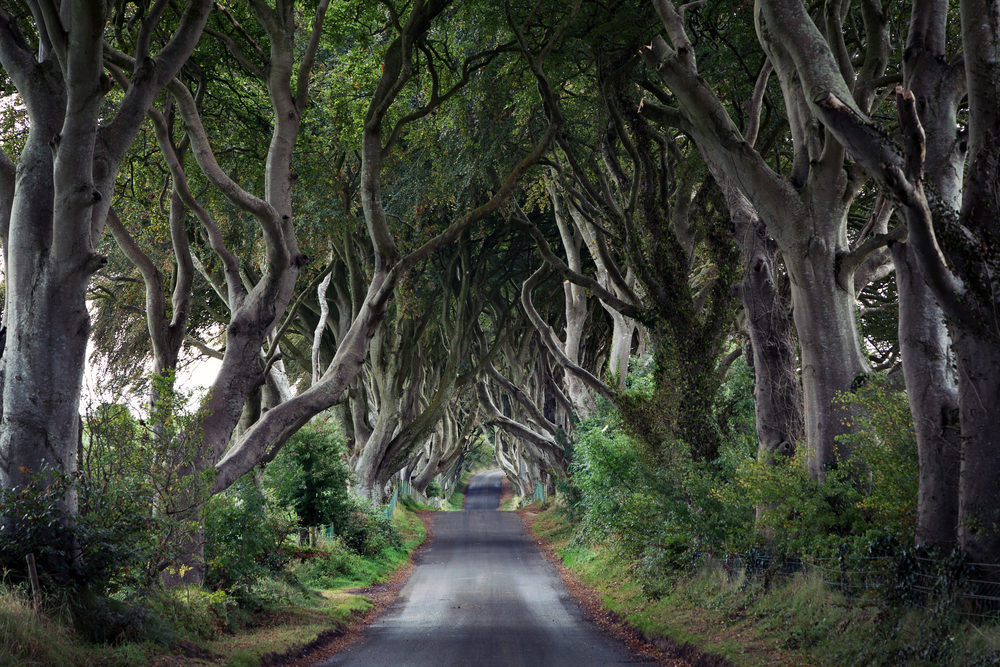 Dark Hedges   Irlanda do Norte