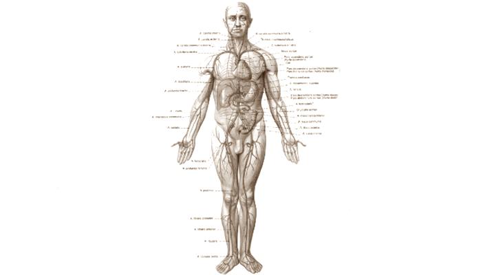 Arti kedutan, firasat, alamat, makna kedutan, super lengkap, paling lengkap, seluruh tubuh, sekujur tubuh, dari kepala sampai kaki, tangan, badan, pinggang, pinggul, dada, payudara, susu, kanan, kiri , tengah, super lengkap terbaru, update