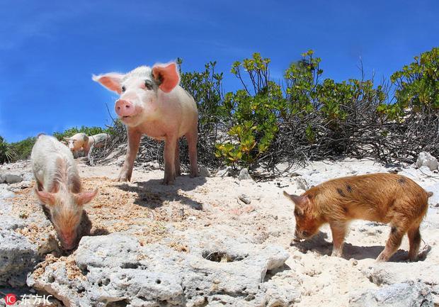 """7 hòn đảo bị động vật chiếm cứ làm """"thiên đường"""" cho riêng mình"""