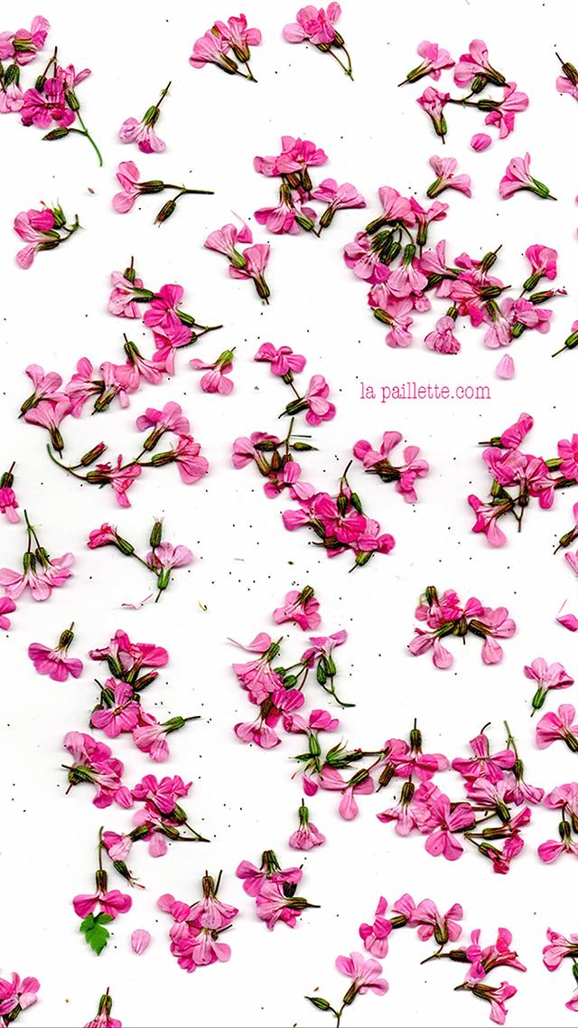 fonds d 39 cran jolies fleurs 1 la paillette blog rennes claire illustratrice et graphiste. Black Bedroom Furniture Sets. Home Design Ideas