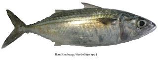 ikan-kembung,www.healthnote25.com