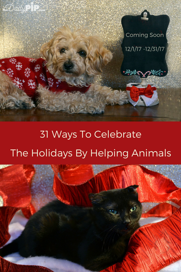 31 fun ways to celebrate the holidays by helping animals.