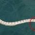 หัวใจแทบ !! ชาวประมงเจอ !! ปลากำลังโดนงูเขมือบกลางทะเลพอชูมดูใก้รๆ ชอ็กทันที่เหลือเชีอที่จะเกีดเรี่องแบบนี้ ( ชมพาบ )