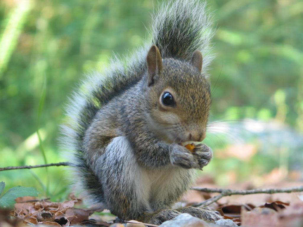 Squirrel | Fun Animals...