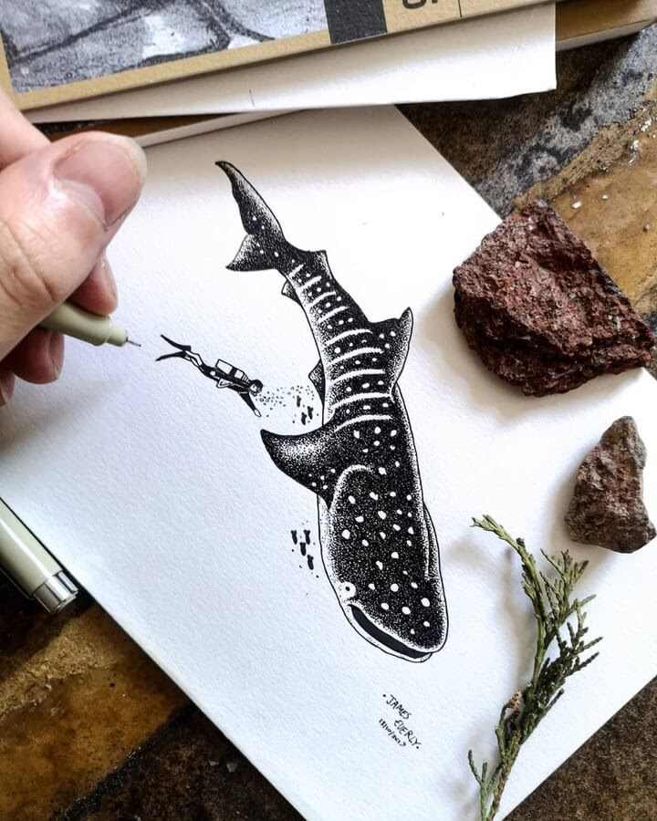 04-Whale-shark-Everly-Drawings-www-designstack-co