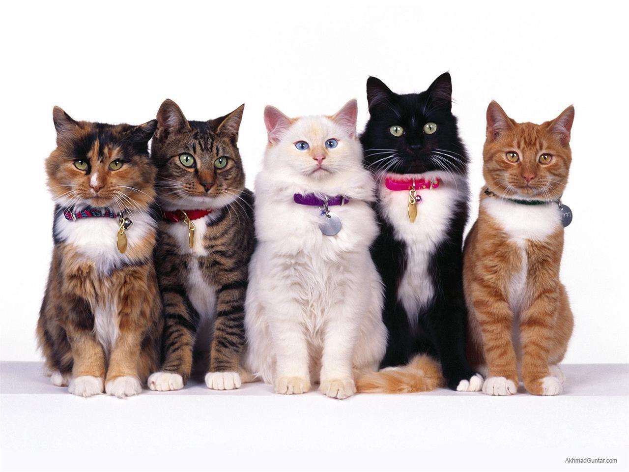 Perawatan Kucing Tips Mudah Untuk Merawat Kucing