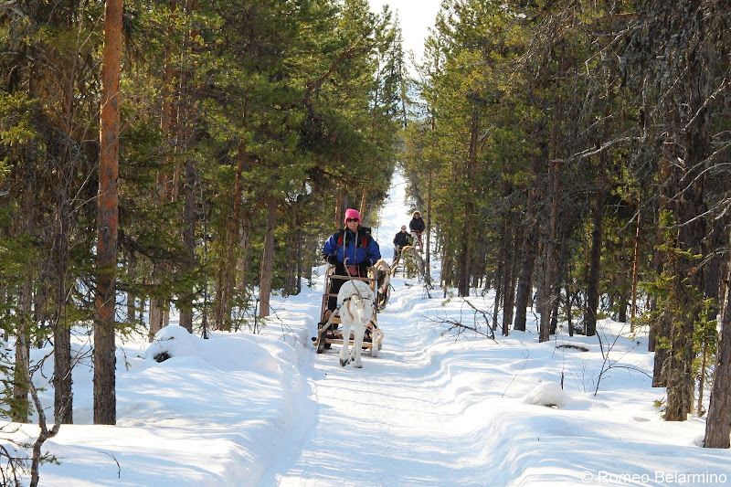 Reindeer Sledding Outdoor Winter Activities in Sweden's Lapland