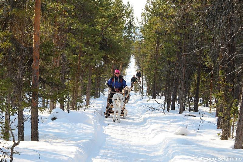 Reindeer Sledding Outdoor Winter Activities in Sweden's Lapland