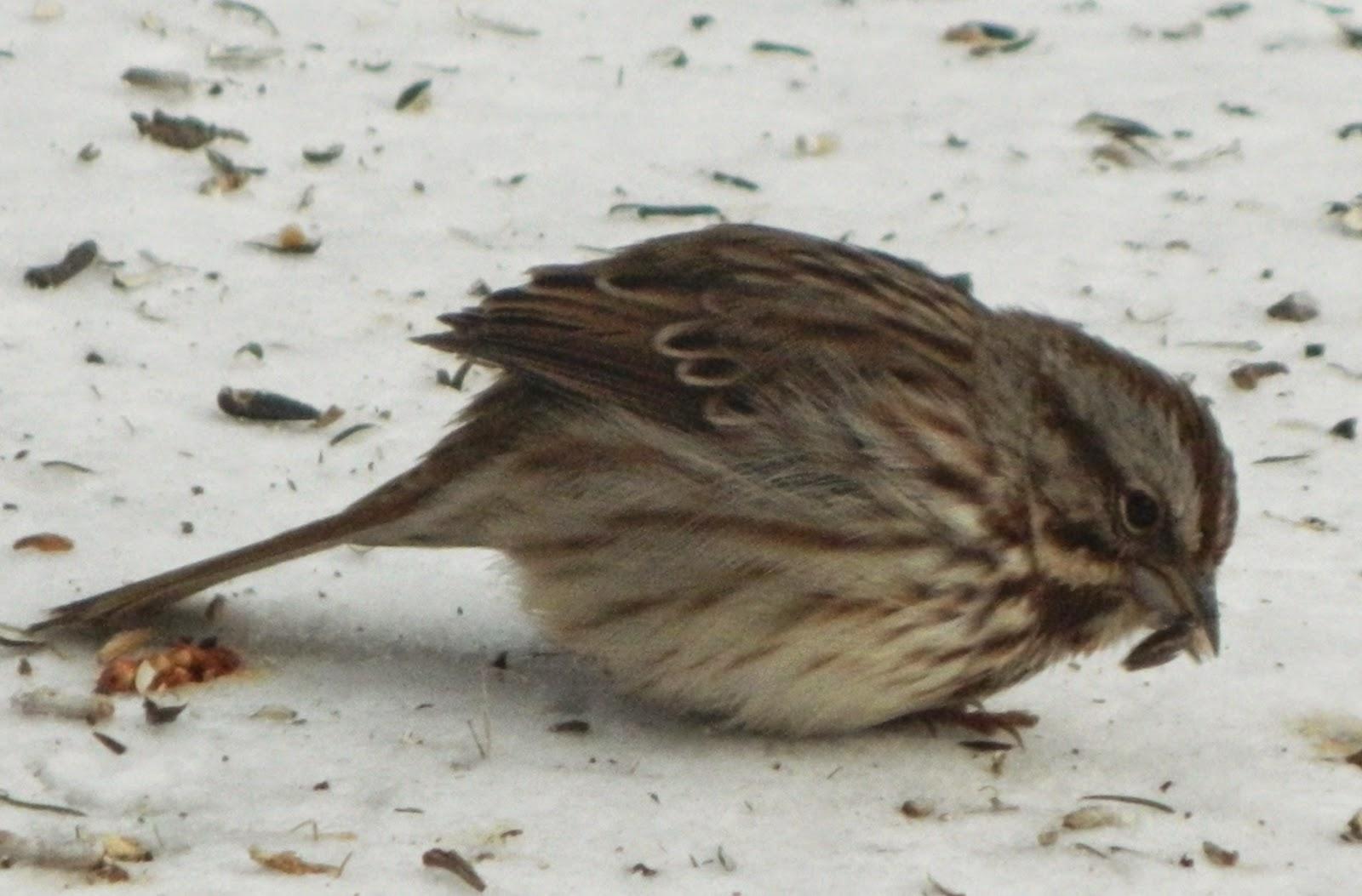 Pams English Cottage Garden Onelegged Sparrow