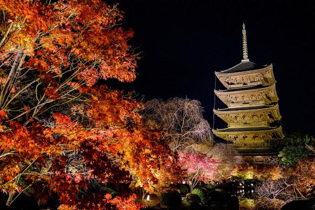 京都 東寺 紅葉ライトアップ