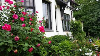Blütenpracht am Gutshaus Kubbelkow