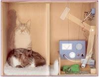 Il paradosso del gatto di Schrödinger:  finchè non si osserva il sistema il gatto è sia morto sia vivo