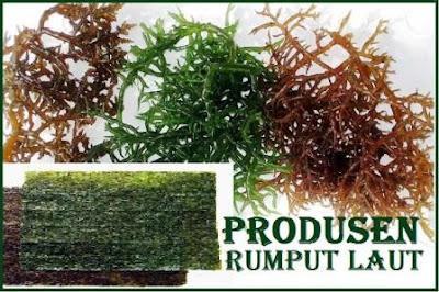 supplier distributor rumput laut kering - tepung agar-agar Sby