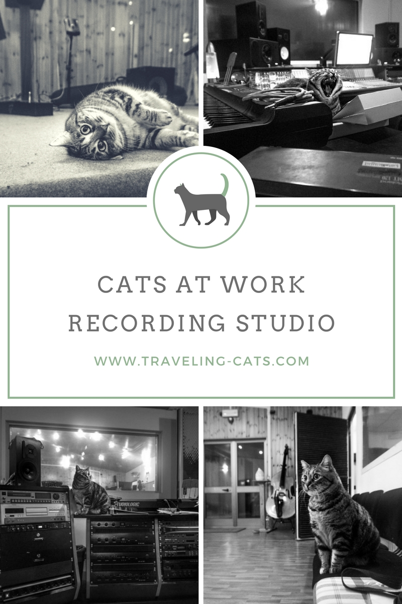 cat recording studio