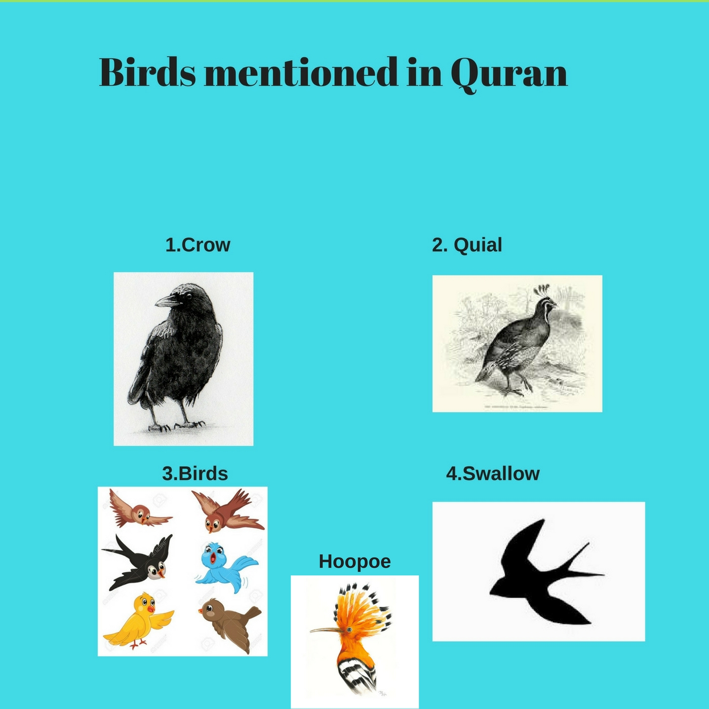 Thefireflies Birds Mentioned In Quran Life Cycle Of A