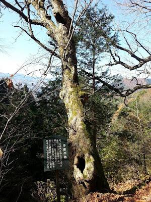 旧中山道鳥居峠_子産の栃