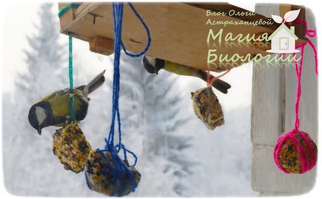 наблюдение-птиц-на-кормушках-магия-биологии-синицы-пряники-для-птиц