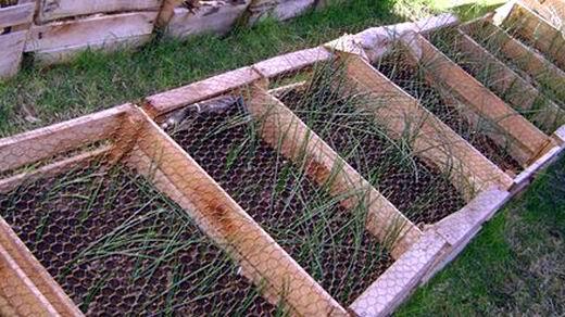Proyecto Pragmalia 327 Fomentar El Cultivo De Azafran - Cultivo-azafran