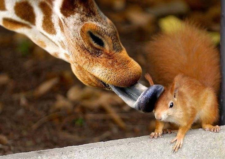 http://2.bp.blogspot.com/-n8yo71lXMGo/T8umwb1DxLI/AAAAAAAABh0/aGdHvMiyOa8/s1600/most+beautiful+animal+(10).jpg