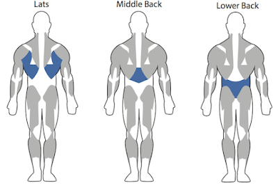 exercises for muscular back,back gym workout