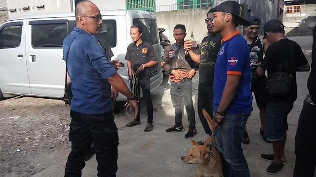 Mengerikan! Hebohkan Warga Depok, 9 Anjing Ini Ditemukan Menggerogoti Mayat Majikannya yang Sudah Membusuk