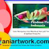 Tutorial Manipulasi Gambar Ikan Menjadi Seperti Mentimun Dengan Picsay Pro