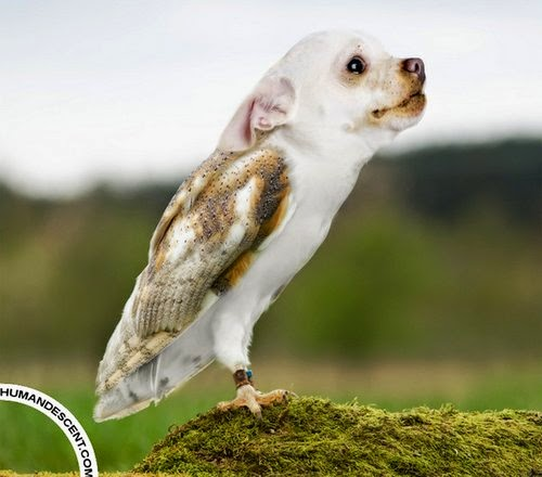 29-Owldog-Martin-Humandescent-Surreal-Animal-Mashup-www-designstack-co