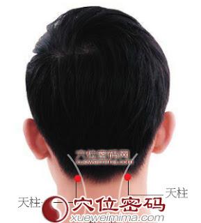 天柱穴位 | 天柱穴痛位置 - 穴道按摩經絡圖解 | Source:xueweitu.iiyun.com