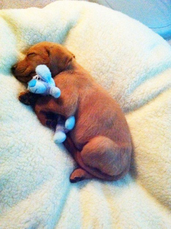 32 Cute Gel Nail Polish Designs For Ladies: 32 Cute Sleeping Puppies (32 Pics)