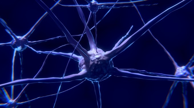 Yeni Bir Multipl Skleroz(MS) Subtipi Keşfedildi!
