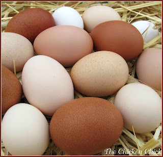 CLUTCH: an accumulation of eggs in a nest.