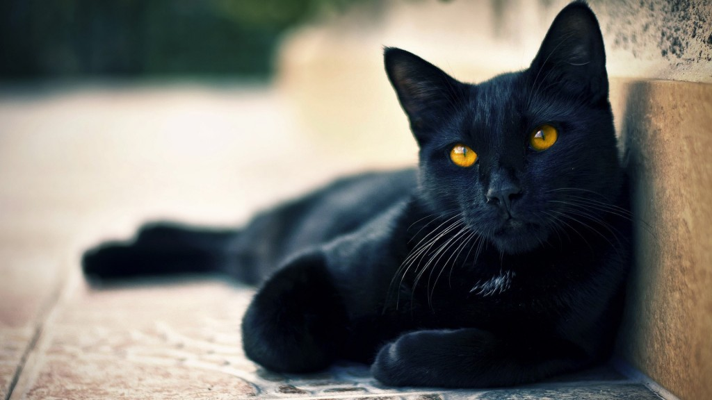 Black Cats HD Wallpapers