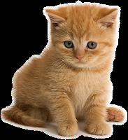 Gatinho filhote png