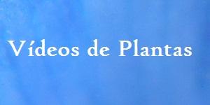 Plantas en Vídeo