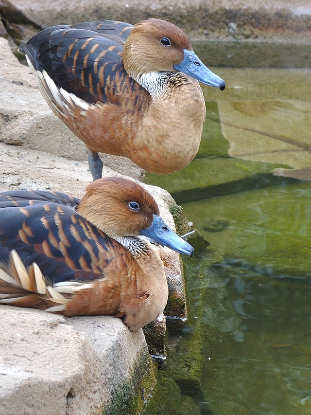 birds in Antwerp zoo