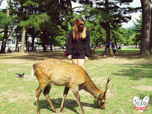 Snapshots of My 2016 Nara Japan Summer Trip