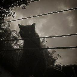 Noite, gato preto
