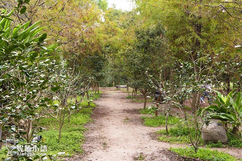 【花蓮秘境】鈺展苗圃。秋冬限定絕美落羽松秘境