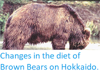 http://sciencythoughts.blogspot.co.uk/2015/03/changes-in-diet-of-brown-bears-on.html