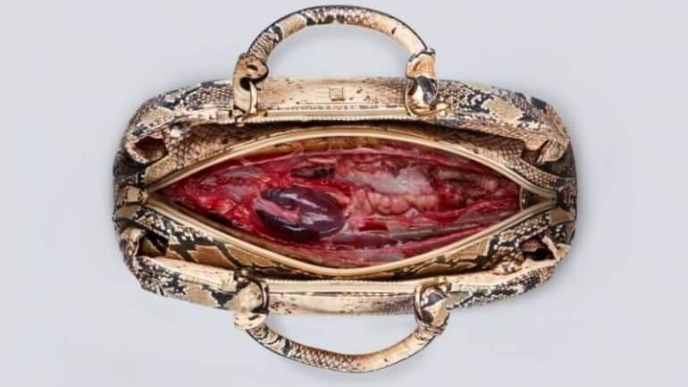 Carteira de pele de cobra com o interior como se fosse carne viva
