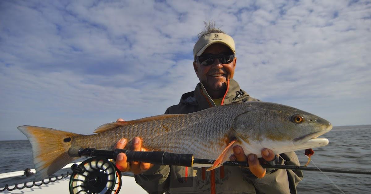 Florida Red Fish In Pine Island Sound