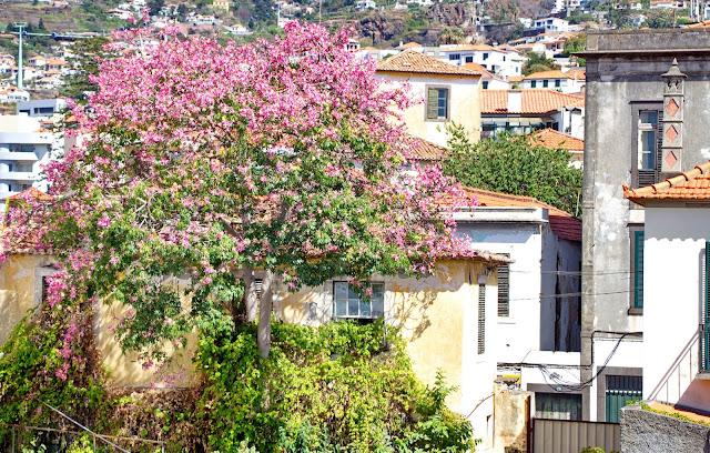 a árvore das flores que encantam