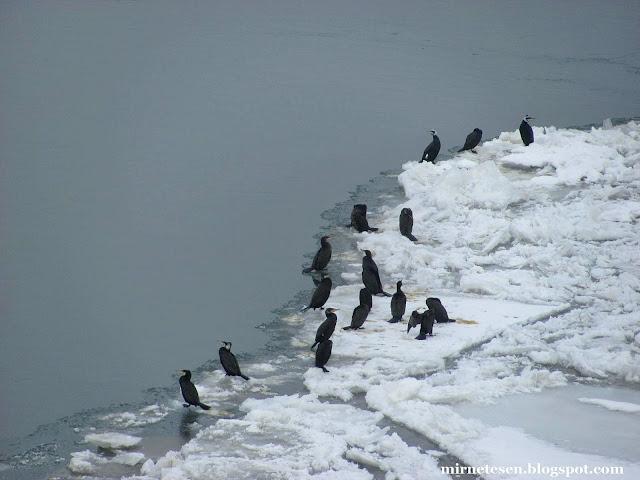Петроварадин: ледоход на Дунае