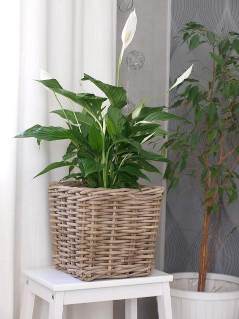 olohuoneessa kasveja