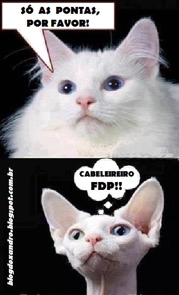 FDP!!.png (363×598)