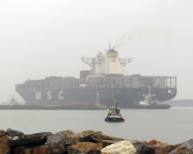 Piero Neri (IMO 9351713), MSC Adelaide (IMO 9618290), Luisa Neri (IMO 9695597), pilot boat, port of Livorno