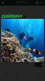 На глубине аквалангисты занимаются дайвингом, вокруг много разных рыб