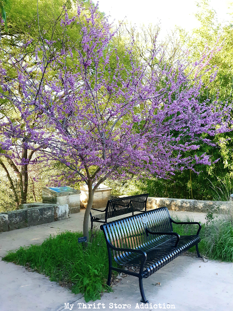 spring in the Texas Hill Country
